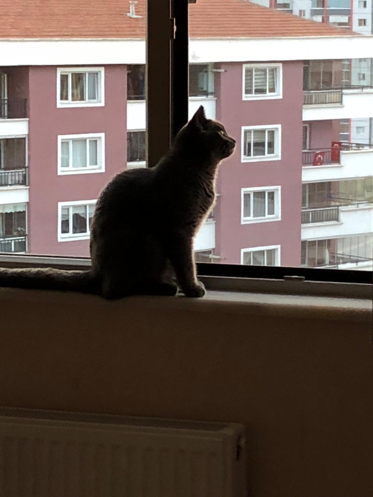Ankara Kedi Sineklik